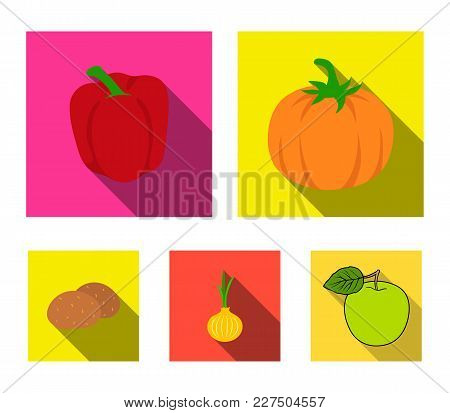 Yellow Pumpkin, Sweet Red Pepper, Onion Bitter, Potatoes. Vegetables Set Collection Icons In Flat St