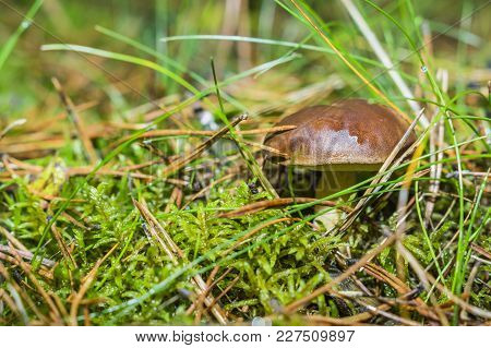 Boletus And Pudding Next To Each Other