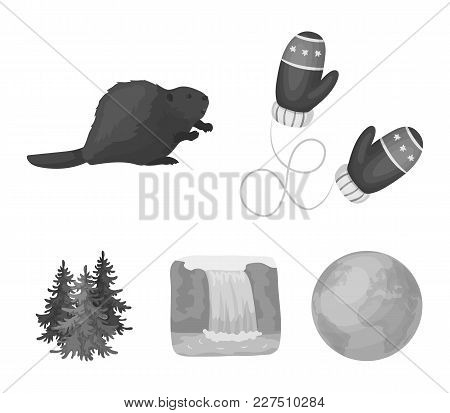 Canadian Fir, Beaver And Other Symbols Of Canada.canada Set Collection Icons In Monochrome Style Vec