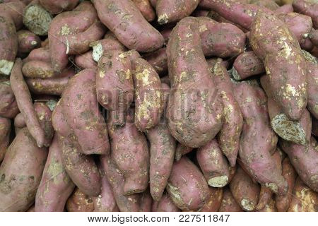 Fresh-gathered rich harvest of large tubers of a yam in the vegetable market