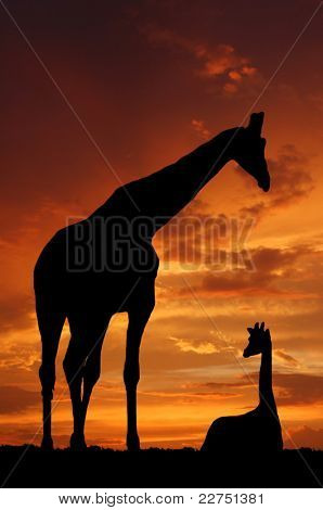 Two giraffes over sunrise poster