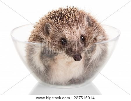 Funny Little Hedgehog Gets Out Of Glass Bowl Isolated On White Background