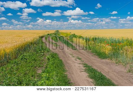 Classic Ukrainian Rural Landscape With Wheat Fields And Earth Road Between Them