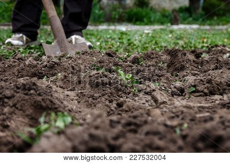 A Woman's Hand Digs Soil And Soil With A Shovel. Close-up, Concept Of Gardening, Gardening