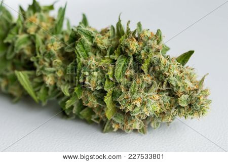 Macro Close Up Of A Fresh Female Cannabis Plant