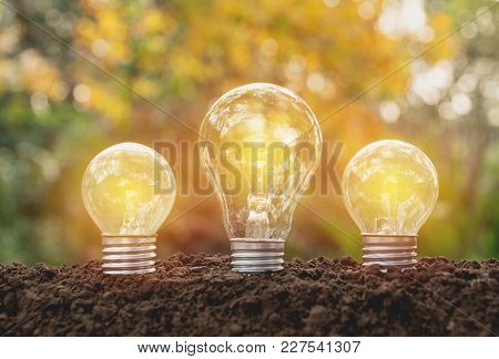 Hand Of Person Holding Light Bulb For Idea Or Success Or Solar Energy Concept.