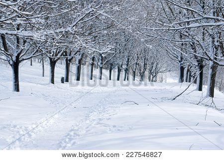 Winter In The Empty Park In Dnepropetrovsk City, Ukraine.