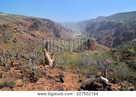 Yemen. Most Beautiful Canyon On Socotra Island, Wadi Dirhur (daerhu).