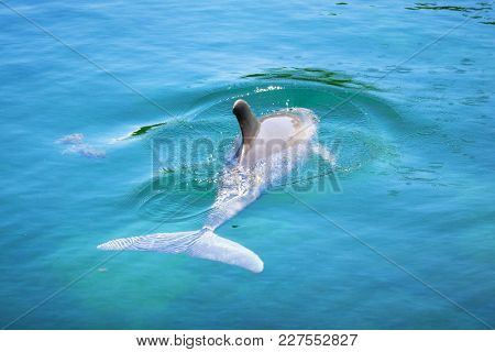 Dolphin in the Caribbean Sea of Mexico