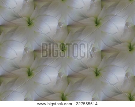 White Amaryllis Blossoms With Light Green Repeating Diagonally, Shimmering And Dreamy.