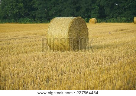 Hay Bale Dry On Field, Agriculture. Fodder, Forage, Haymaking. Agriculture, Farming, Ecology. Harves