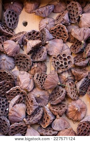 Dried Zen Lotus Seed Pods Flowers Dried Flowers Home Decor Natural Zen Lotus Lotus Stem Seedless Lot