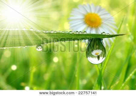 Fresh grass with dew drops close up poster