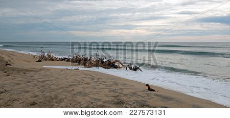 Driftwood On The Beach In San Jose Del Cabo Near Cabo San Lucas In Baja California Mexico Bcs