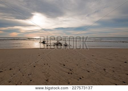 Sunrise Over Driftwood On The Beach In San Jose Del Cabo Near Cabo San Lucas In Baja California Mexi