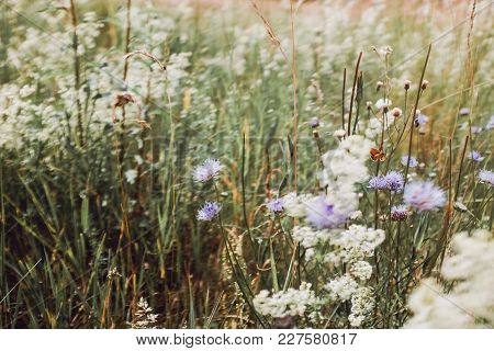 Meadow In Summer Time With Flowers And Butterfly