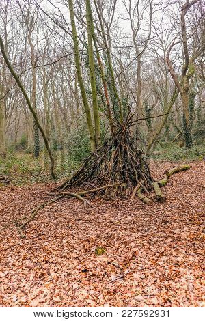 Small Hide Built From Branches In The Woodland In Winter With Lots Of Autumn Leaves On The Ground.