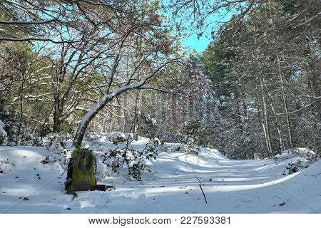 green backpack on snow covered path in snowy woods of Etna Park, Sicily