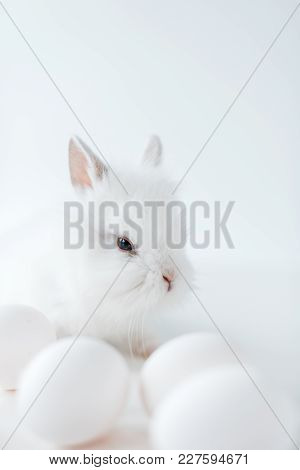 Close-up View Of Adorable White Furry Rabbit And Chicken Eggs On White