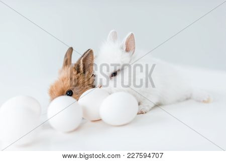 Close-up View Of Cute Furry Rabbits And Chicken Eggs On White
