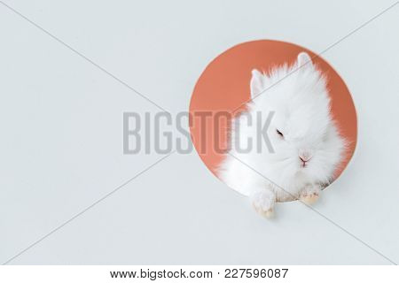 Close-up View Of Adorable White Furry Rabbit In Hole On Grey