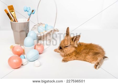 Adorable Furry Rabbit And Painted Easter Eggs On White