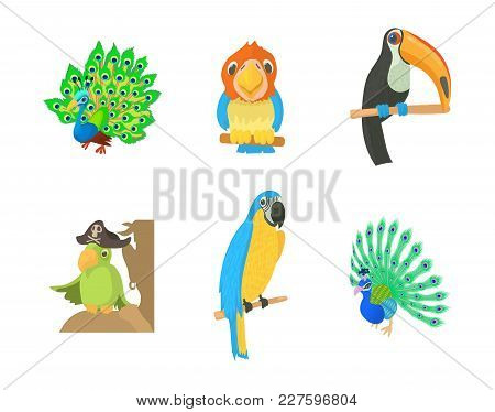 Exotic Bird Icon Set. Cartoon Set Of Exotic Bird Vector Icons For Web Design Isolated On White Backg