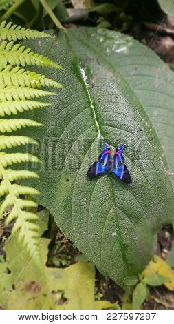 Blue And Black Butterfly Over Green Leaf And Fern