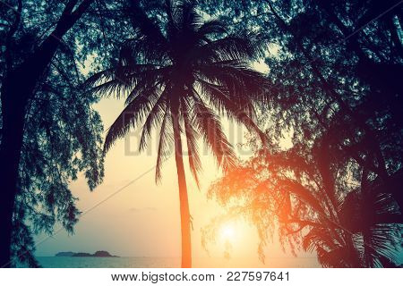 Silhouettes of palm against sky during sunset.