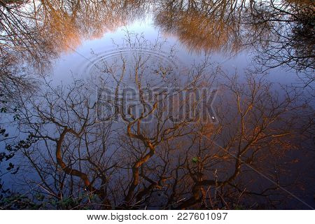 Tree Reflections