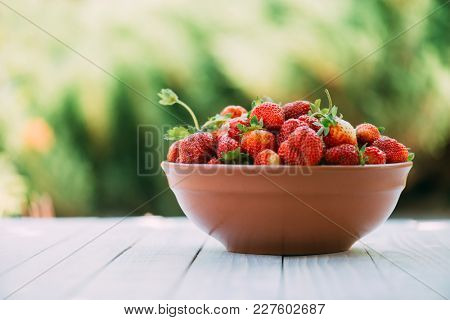 Natural organic strawberry from an own garden in ceramic bowl. Summer day at rural farm. Agriculture concept
