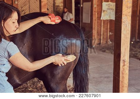 Woman Horseman Brushes The Mane Of Her Horse In Stables On A Farm, Taking Care Of Purebred Pets.