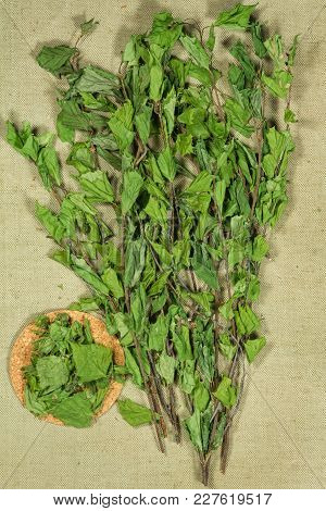 Birch. Dry Plants For Use In Alternative Medicine, Phytotherapy, Spa, Herbal Cosmetics. Preparing In