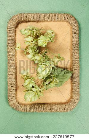 Herbarium. Wild Hop. Dry Plants In Framework Made Of Jute Thread. Scrapbooking. Dried Flower.