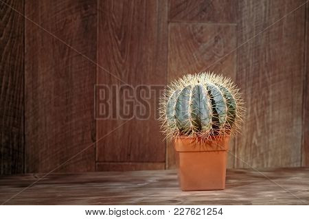 Still Life Natural Cactus Plant On Vintage Wood Background Textured Background. Copy Space For Text.