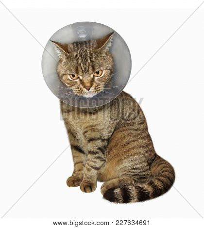 The Cat Is Wearing A Protective Veterinary Collar. White Background.