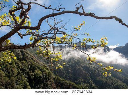 Pico Do Arieiro Seen From Balcoes Viewpoint, Ribeiro Firo, Madeira, Portugal