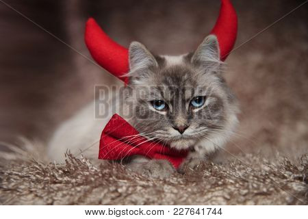 evil elegant cat wearing devil horns and is lying down on furry background