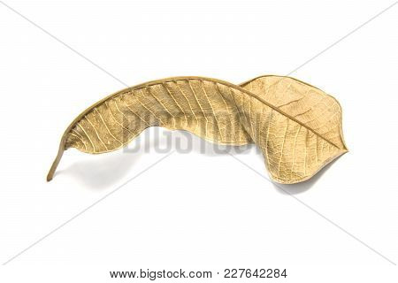 Dried Bay Leaf On White Background. The  Leaf Tree On White Background.