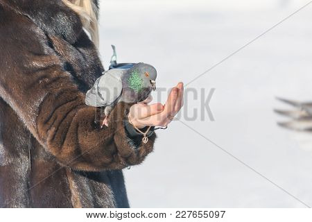 A Woman Is Feeding Pigeons From Her Hands. Feed Birds In Winter With Hands.