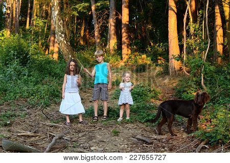 Boy, Two Girls And A Brown Dog Stand In A Dense Forest