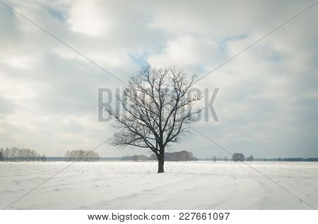 Lonely Tree In Winter, Bare Trees In The Snow