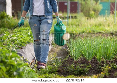 Young Woman Watering Plants And Flowers In The Garden At Summertime. Gardening Girl Watering Flowers
