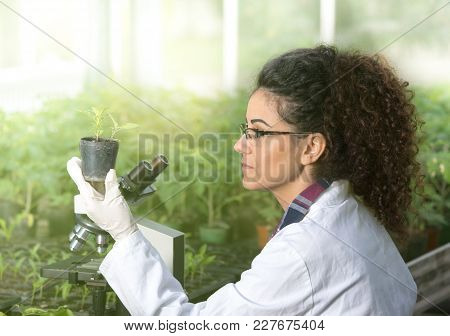 Young Woman Biologist Holding Flower Pot With Sprout And Checking It Growth. Plant Protection Concep