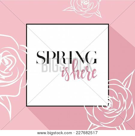 Design Banner With Spring Is Here Logo. Pink Card For Spring Season With Black Frame And Rose. Promo