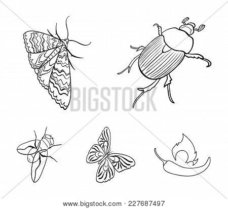 Arthropods Insect Beetle, Moth, Butterfly, Fly. Insects Set Collection Icons In Outline Style Vector