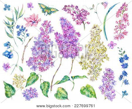 Set Of Watercolor Spring Nature Floral Elements, Separately Sprigs Leaves Flower, Lilacs, Wildflower