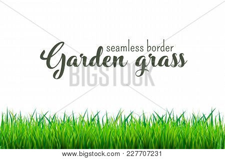 Green Grass Seamless Border Isolated On White Background. Vector Illustration