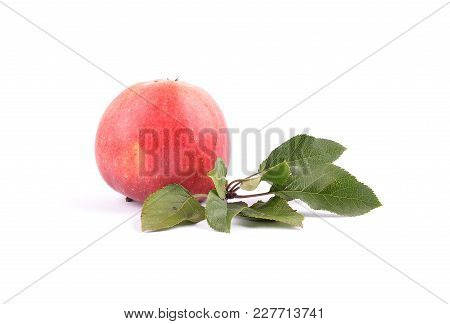 Colorful And Crisp Image Of Apple And Leaves On White