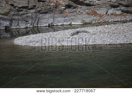 Crocs On Land Near River In The Jungle